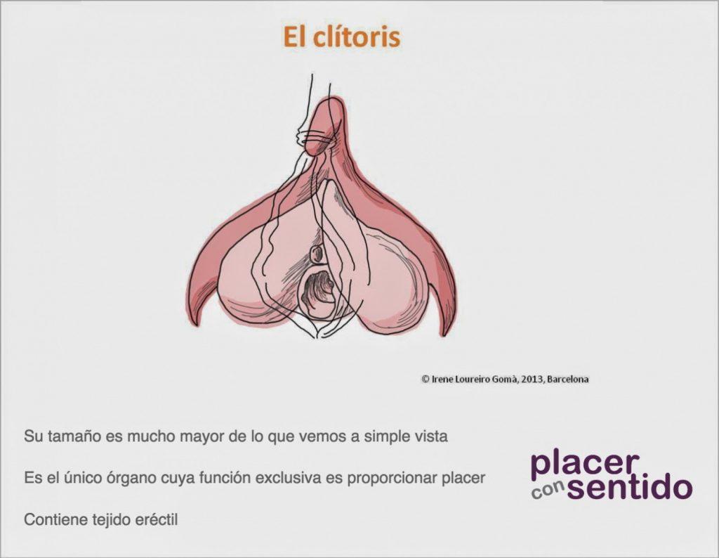 infografía clítoris